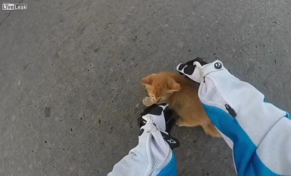 gatitosalvado