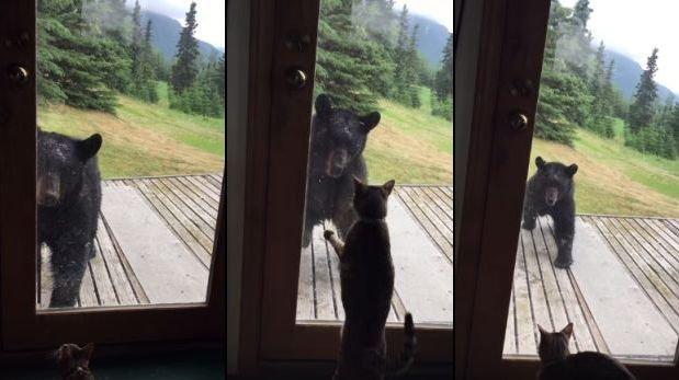 gato-oso