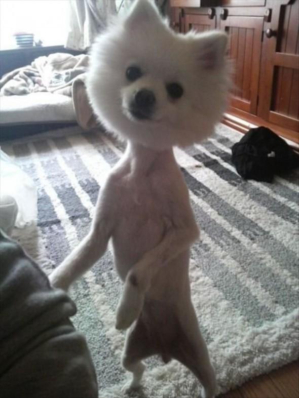 peinado-perro1