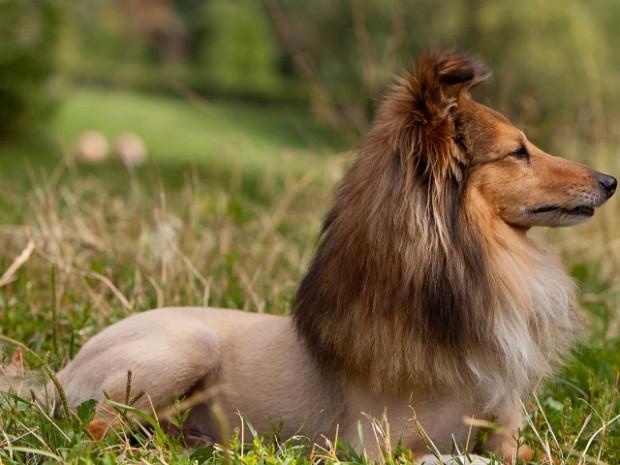 peinado-perro4