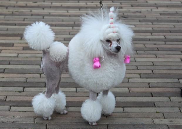 peinado-perro6